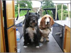 Dog Friendly Campervan