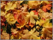 Autumn in a Campervan